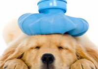 Pet Insurance for NHS Staff, Family and Friends